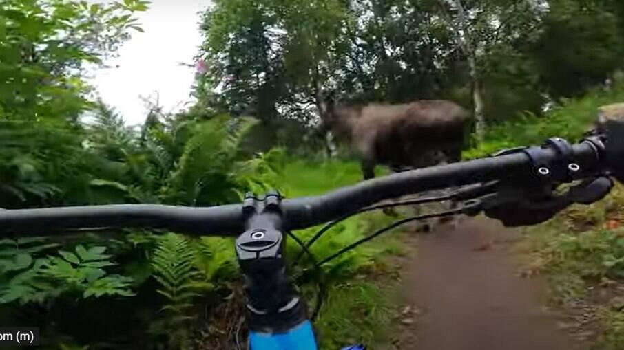 Ciclista quase colide com alce destrambelhado
