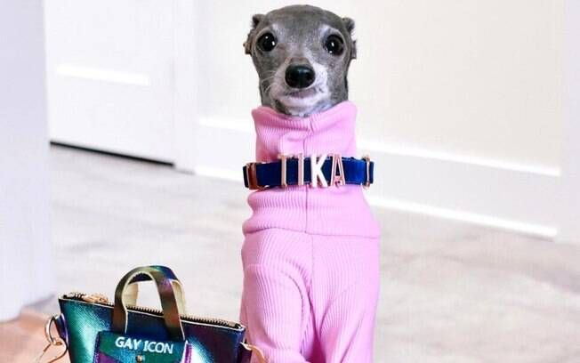 Conheça a Tika The Iggy, cachorra que faz sucesso como influenciadora de moda