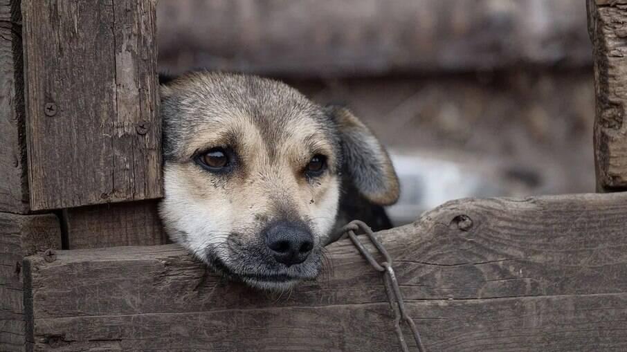 Deixar o animal preso,sem abrigo de sol e chuva e sem acesso a alimentação adequada é crime de maus-tratos