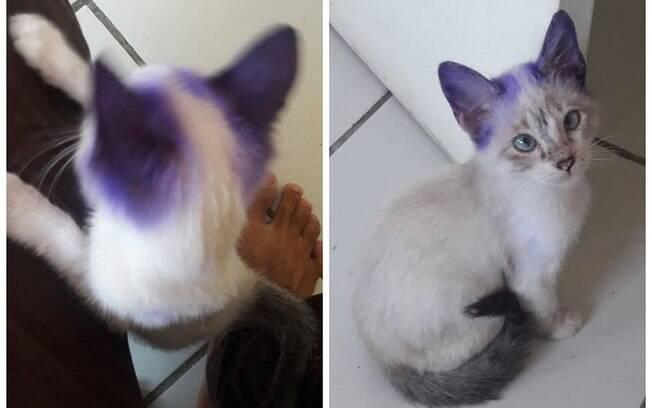 A gatinha Pandora virou e-girl