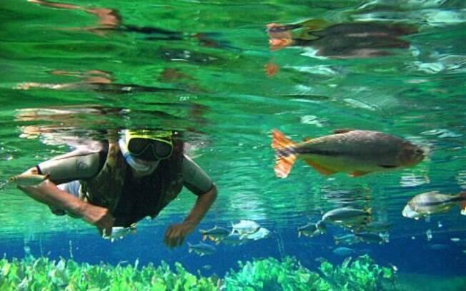 A limpidez das águas de Bonito