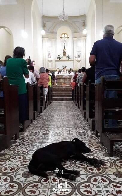 Cachorro abandonado agora mora em paróquia