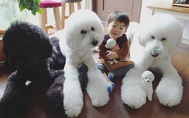 Poodles gigantes e crianças fazem sucesso no instagram