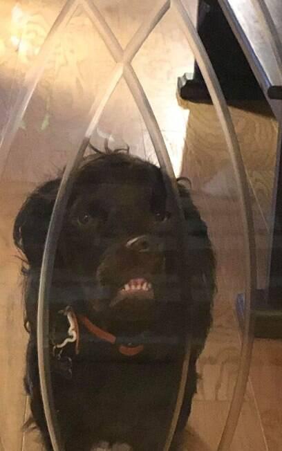 Pet assusta quem passa por sua casa