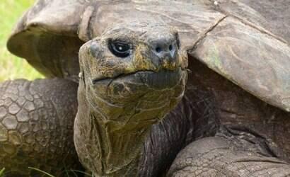 Conheça Jonathan, o animal terrestre mais velho do mundo