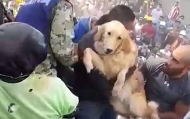 Após o terremoto que atingiu o México na última terça-feira (19), um cachorro gerou comoção no país