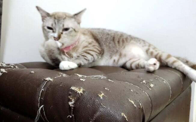 Arranhar móveis é uma das características dos gatos na fase da adolescência