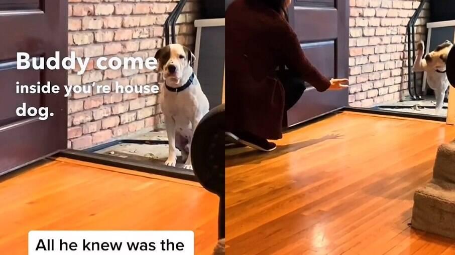 Cachorro resgatado das ruas emociona ao entrar em uma casa pela primeira vez