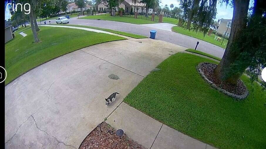 Câmera de segurança mostra gata levando filhotes para a garagem de morador