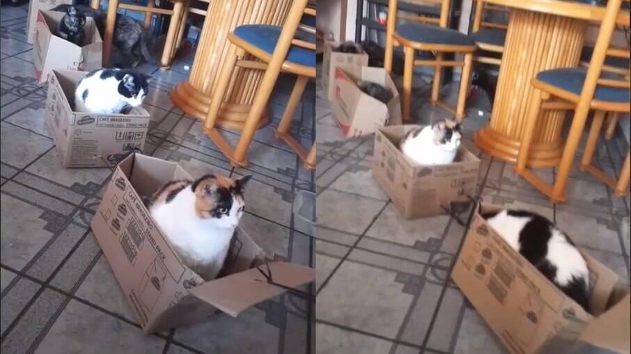 Brasileiro cria trem de papelão para os gatinhos