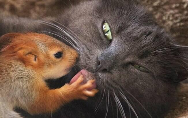 A relação de amor entre Pusha e os filhotes de esquilo viralizou em vídeo na internet