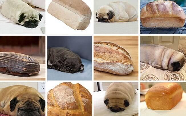Cachorro ou pão