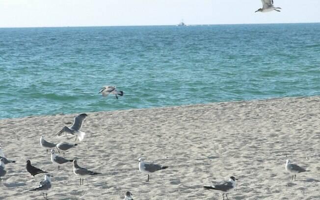 Ponto de encontro de americanos, Haulover Beach é única praia oficial de nudismo em Miami