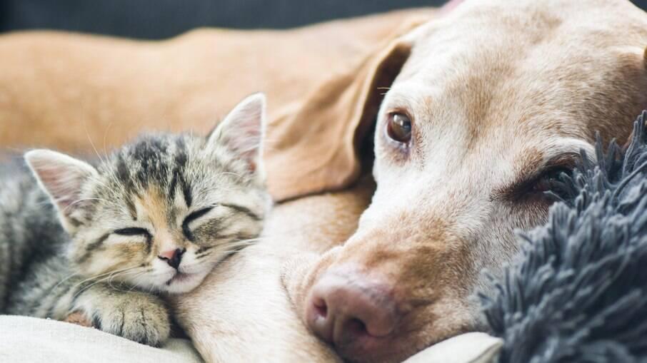 Os animais de estimação idosos precisam receber cuidados especiais
