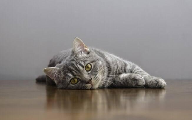 O câncer em gatos altera muito o comportamento dos bichanos