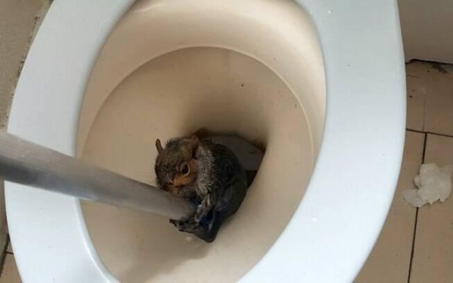 Estudante ligou para autoridades depois de encontrar um esquilo entalado no vaso sanitário da república onde mora