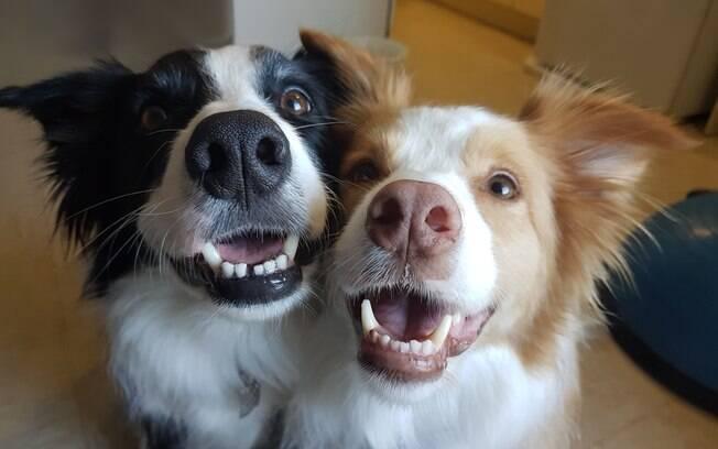 . Agora que você já sabe que cheirar o rabo de cachorros não é estranho, mas sim muito importante para a comunicação do peludo, não impeça tal comportamento