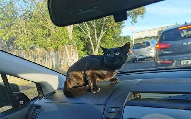 Gato aleatório no carro de Melina