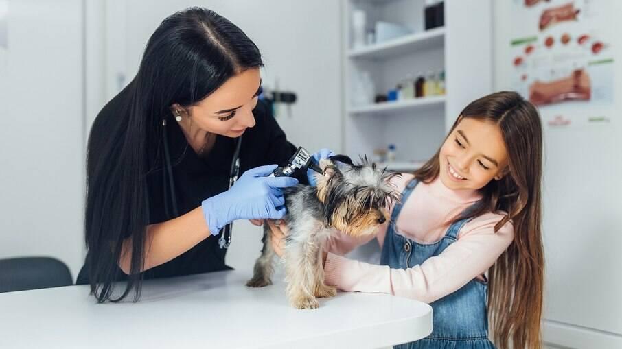 Os cães não devem sair para passear ou ter contato com outros animais sem que antes tenham tomado todas as vacinas