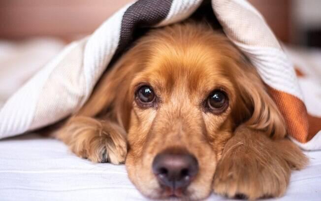 Onda de frio: veja cuidados que devem ser tomados com os pets