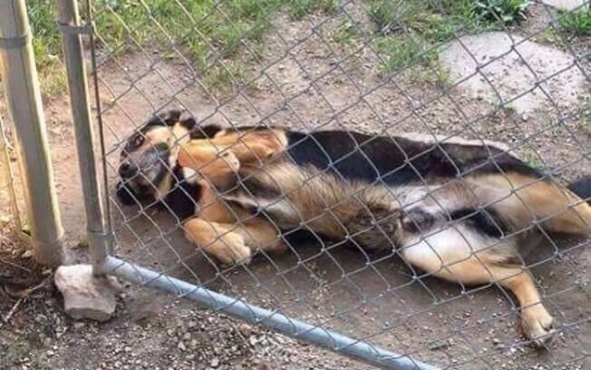 Cuidado com esse cachorro querendo cócegas na barriguinha.