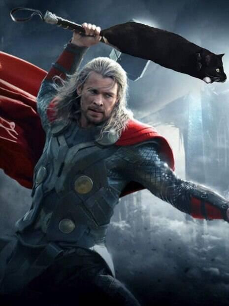 Gato como martelo do Thor