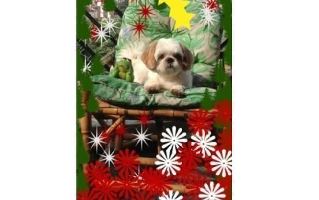 Pets De Natal Cães Usam Roupinhas De Festa Bichos Ig