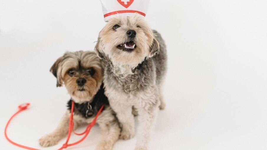 Cachorros fantasiados de médico
