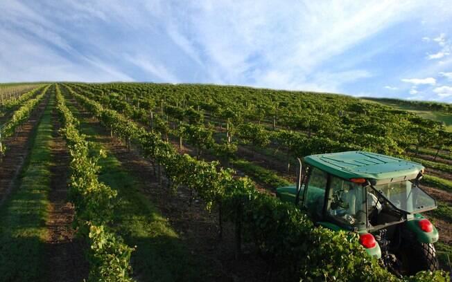 Lakeridge Winery oferece um tour  gratuito e com duração de 45 minutos