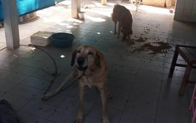Cães foram abandonados em casa em Santa Rita do Passa Quatro