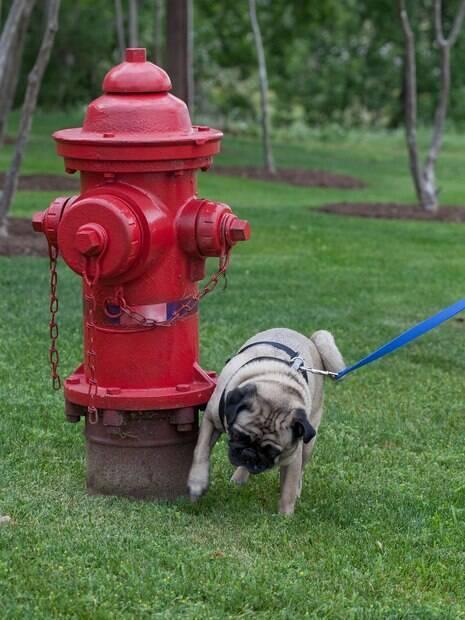 Os postes, hidrantes e valetas são grandes alvos da marcação de território