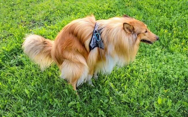 Por mais que seja desagradável e meio fedido, analisar as fezes de cachorro é algo que todos os tutores devem fazer