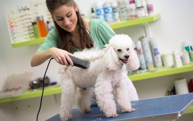 A tosa higiênica ajuda a garantir mais conforto e saúde ao animal e vai além da estética