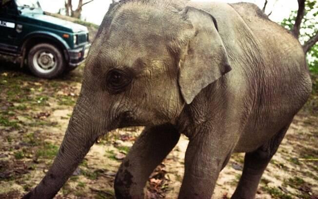 Kaziranga: os animais roubam as atenções no parque Indiano