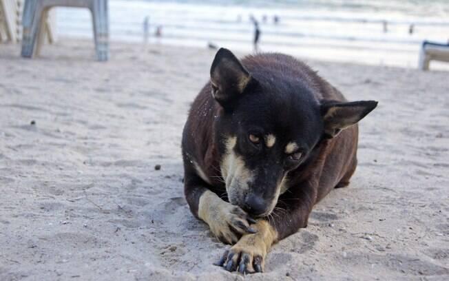 O cachorro passa a língua em objetos e ambientes repletos de bactérias, correndo o risco de desenvolver certas doenças