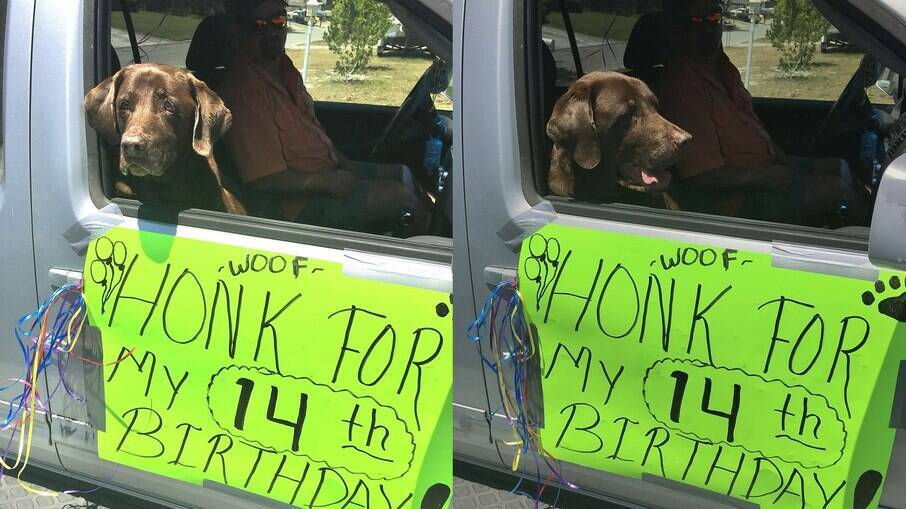 A família do Dakota faz tudo para celebrar o aniversário do cãozinho da melhor forma possível