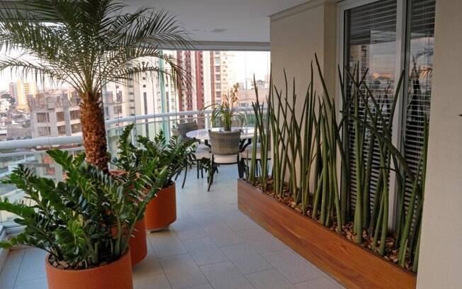 Plantas de f cil cultivo para quem n o tem muito tempo - Planta de exterior resistente ...