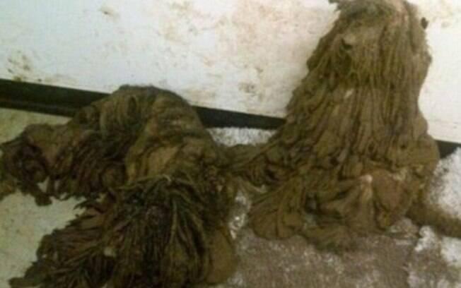 Quase não dava para identificar quais animais estavam por baixo dos pelos