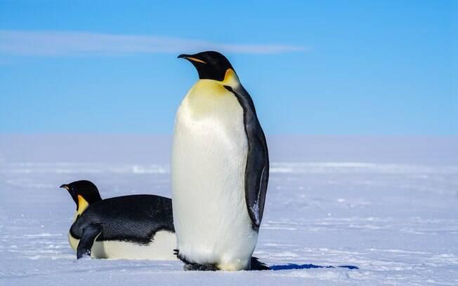 Pinguins com malária são substituídos por pinguins de plástico (imagem ilustrativa)