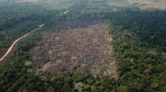 Empresas europeias ameaçam boicotar produtos brasileiros por desmatamento