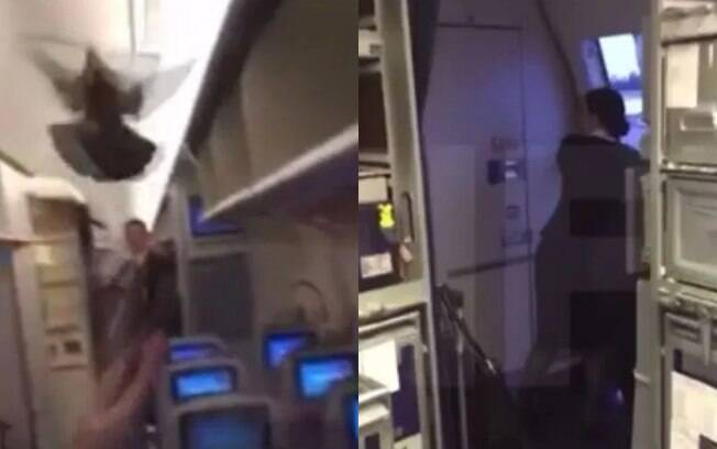 Um pombo invadiu uma aeronave da Aeroflot, na Rússia, e assustou os tripulantes de cabine