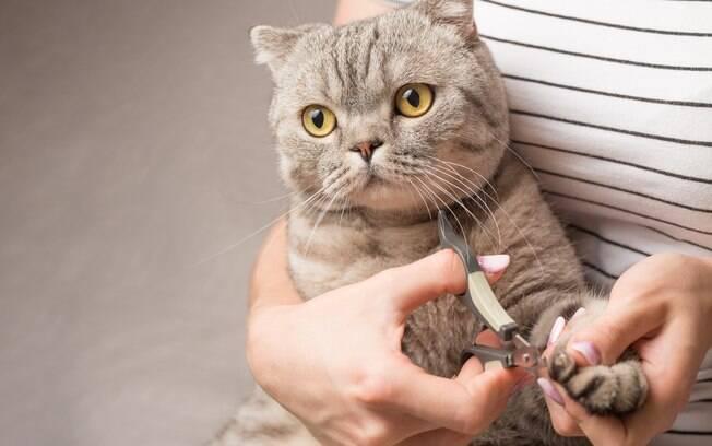 É preciso um cortador específico para cortar unha de gato
