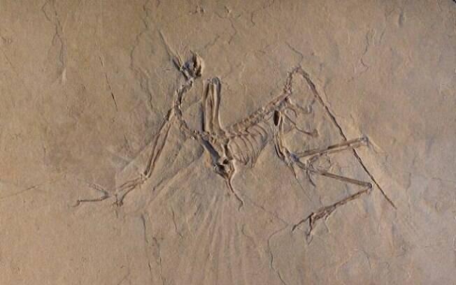 Ossos do Arqueopteryx foram escaneados na França,  por meio de técnica de Facilidade de Radiação de Sincrotron Europeia