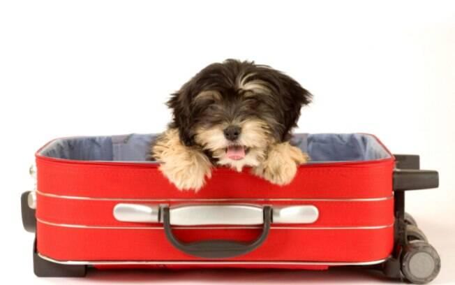 Saiba como viajar com seu cachorro de forma mais segura!