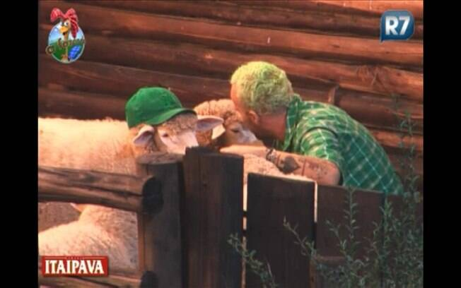 Gui mata saudade das ovelhas