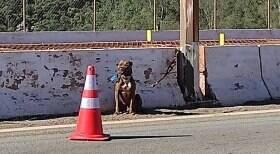 PRF resgata cão amarrado a poste de viaduto
