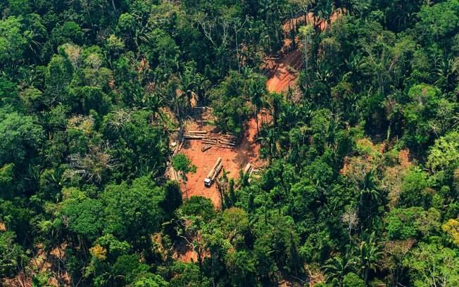 Terras indígenas têm sofrido com invasões de madeireiros ilegais, de acordo com o MPF