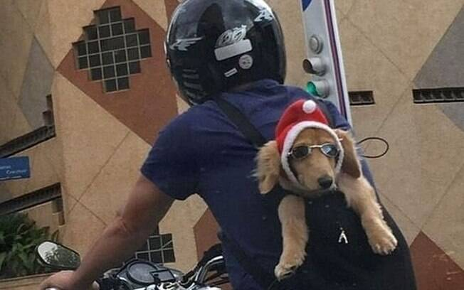 Cachorro na garupa de moto em São José do Rio Preto