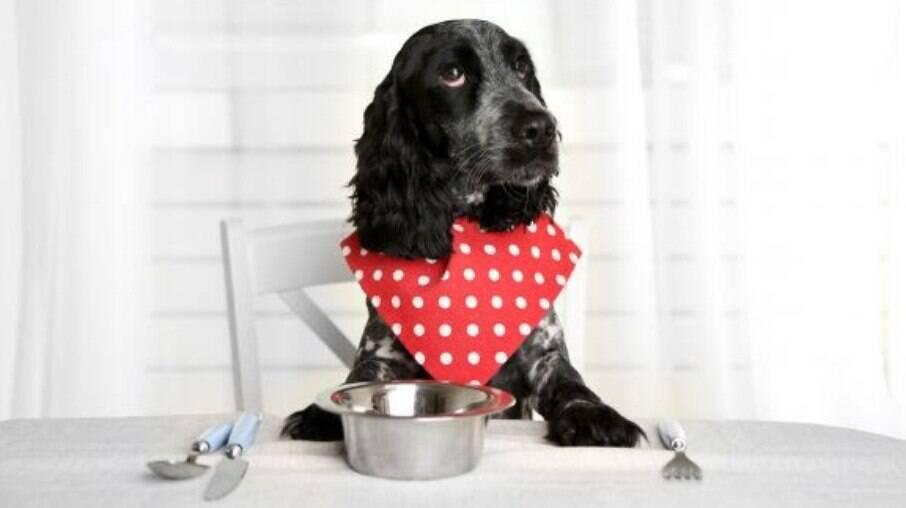 Cachorro esperando sua refeição