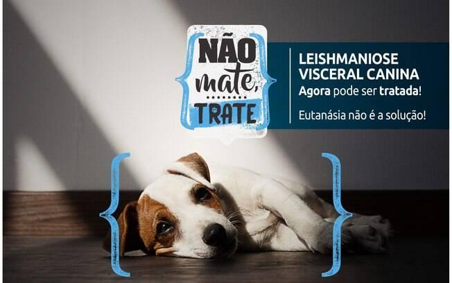 A Leishmaniose tem tratamento e o cachorro contaminado não precisa sofrer eutanásia